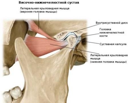 Нижньощелеповий суглоб та його анатомія